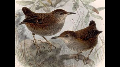 Birdsong Not Music, After All   Science   AAAS