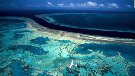 The Great Barrier Reef is literally in hot water (Opinion