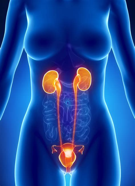 Urinary tract infections - Women Health Info Blog
